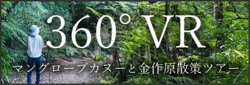 360°VR マングローブカヌーと金作原散策ツアー