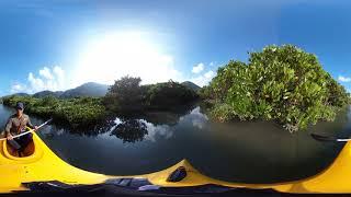 360°VR マングローブカヌーと森と滝のツアー
