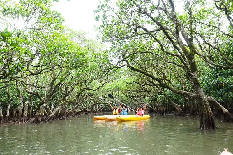 マングローブカヌーと森と滝のツアー